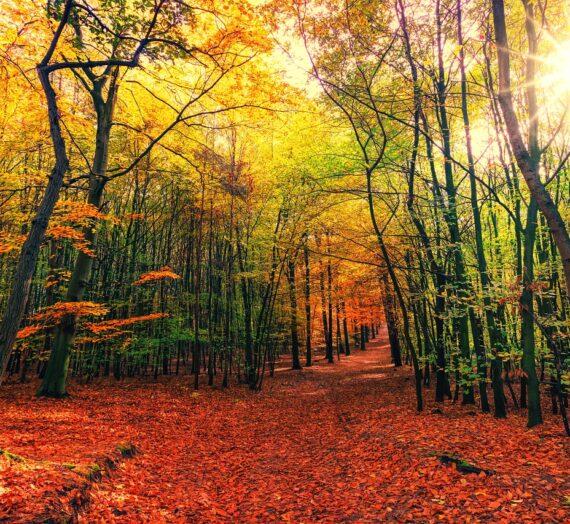 Kolory jesieni w mieszkaniu